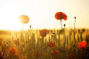 Spiritual Warfare Prayers To Get Married